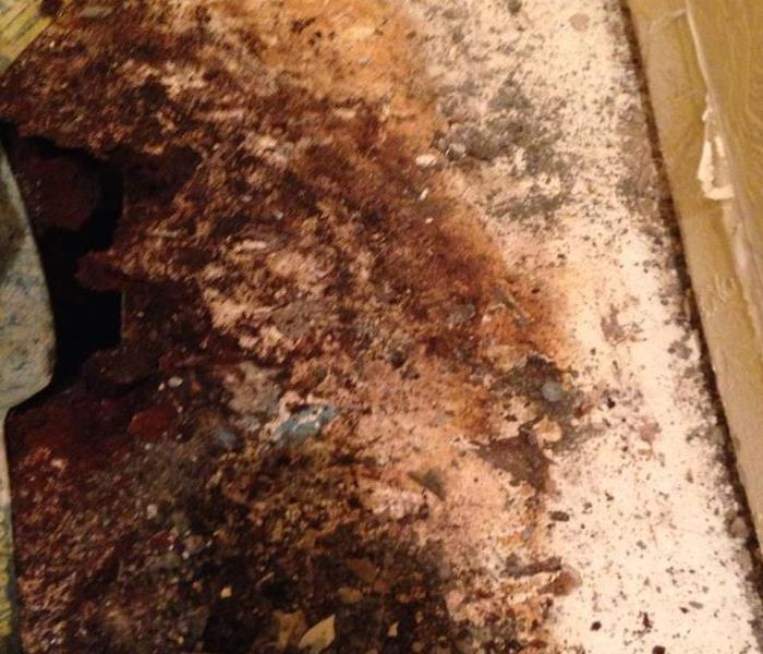 Commercial Mold Loss in Las Vegas, NV After