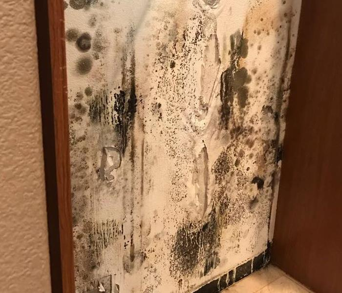 Wall covered in mold.