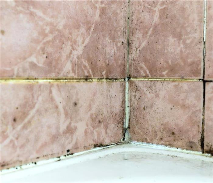 Effective Ways To Eliminate Bathroom Mold