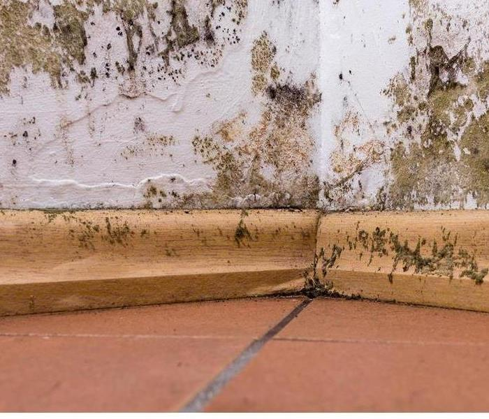Mold Remediation Can Mold Odor Be Eliminated?