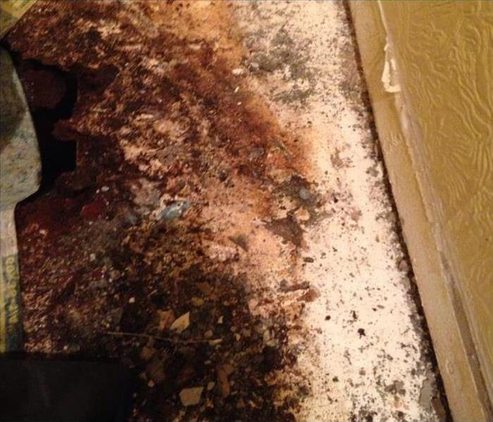 Mold Remediation The Importance of Mold Inspections in the Home