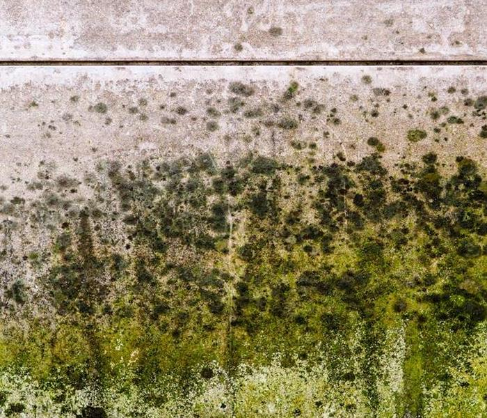 Mold Remediation 3 Tips To Slow Down Mold Damage